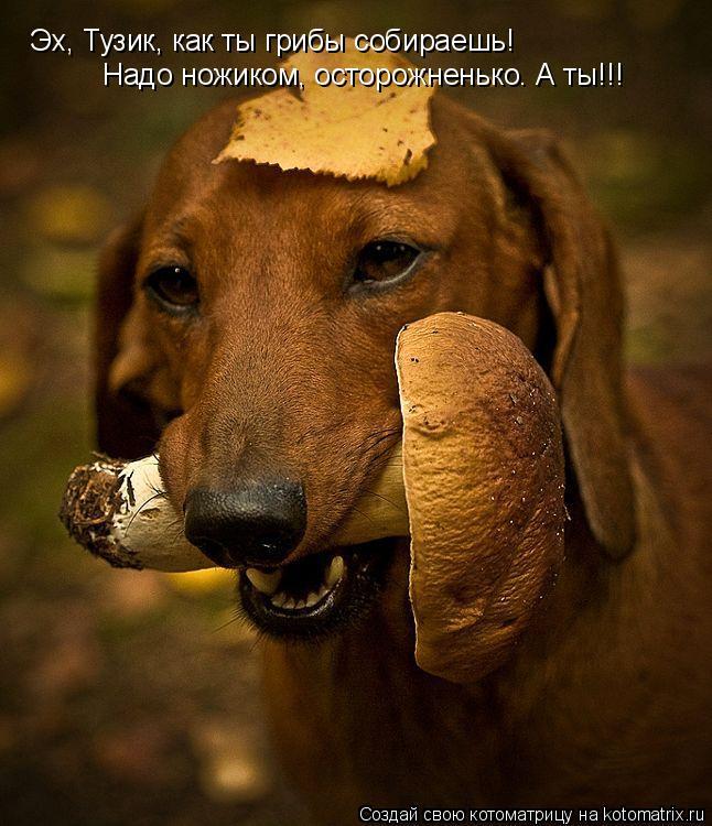 Котоматрица: Эх, Тузик, как ты грибы собираешь! Надо ножиком, осторожненько. А ты!!!