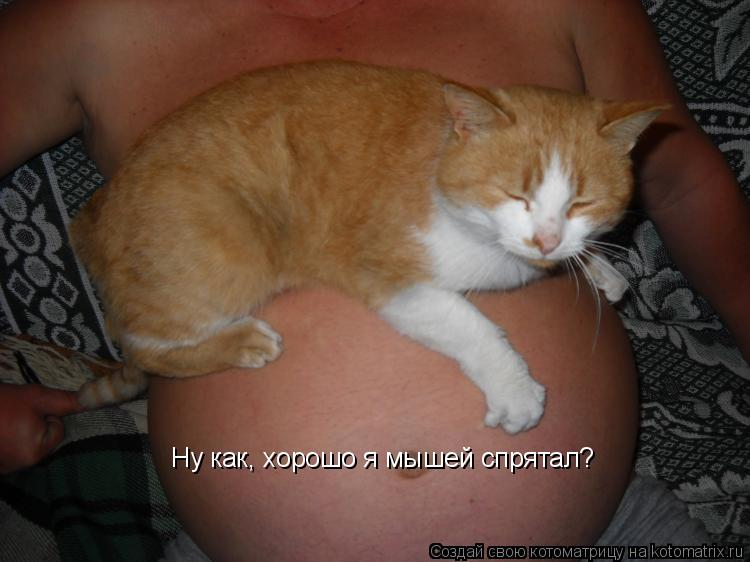 Котоматрица: Ну как, хорошо я мышей спрятал?