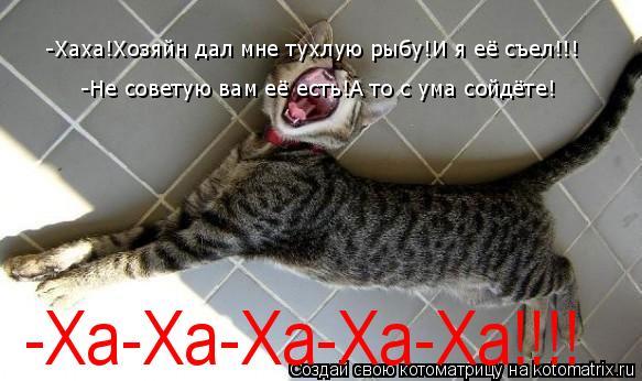 Котоматрица: -Хаха!Хозяйн дал мне тухлую рыбу! -Хаха!Хозяйн дал мне тухлую рыбу!И я её съел!!! -Не советую вам её есть!А то с ума сойдёте! -Ха-Ха-Ха-Ха-Ха!!!!