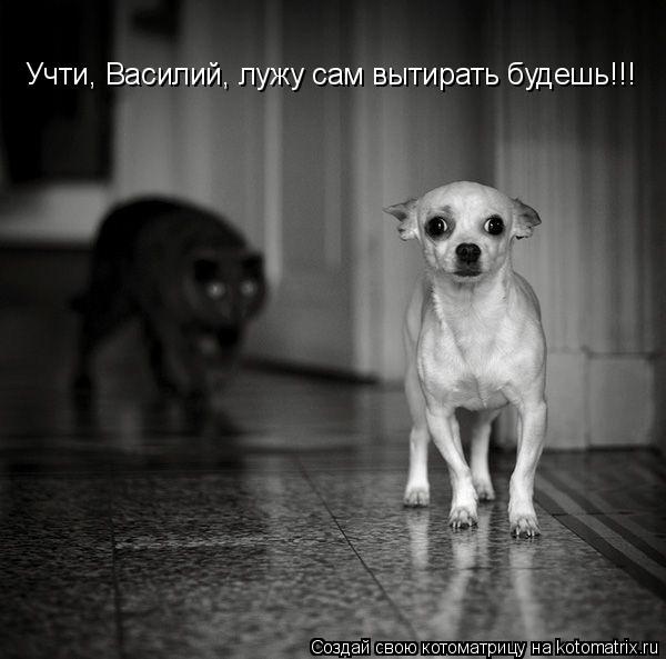 Котоматрица: Учти, Василий, лужу сам вытирать будешь!!!