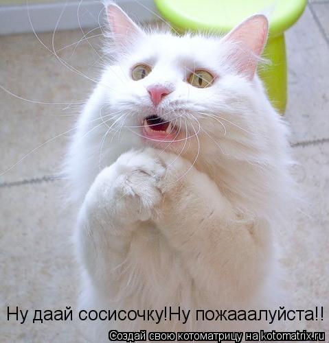 Котоматрица: Ну даай сосисочку!Ну пожааалуйста!!