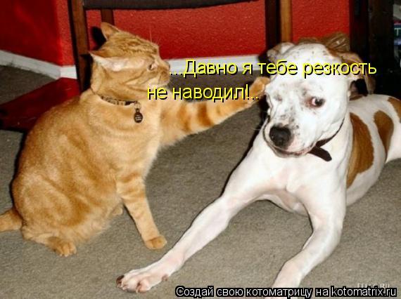 Котоматрица: ...Давно я тебе резкость  не наводил!..