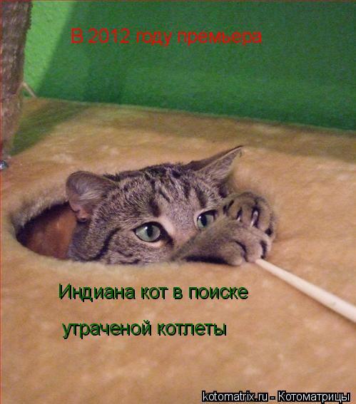 Котоматрица: В 2012 году премьера Индиана кот в поиске  утраченой котлеты