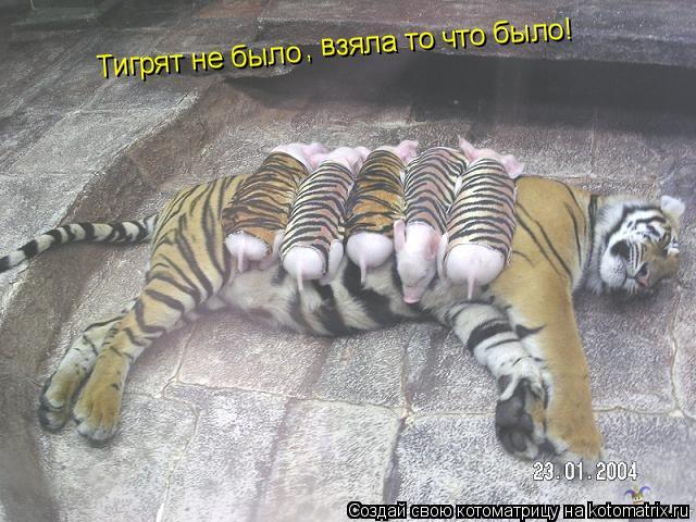Котоматрица: Тигрят не было , взяла то что было!