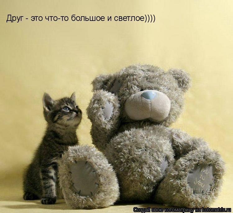 Котоматрица: Друг - это что-то большое и светлое))))