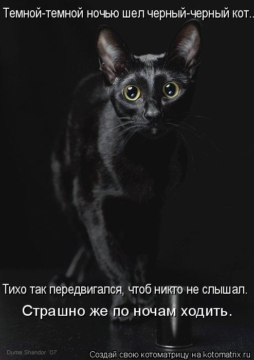 Котоматрица: Темной-темной ночью шел черный-черный кот...  Тихо так передвигался, чтоб никто не слышал.  Страшно же по ночам ходить.