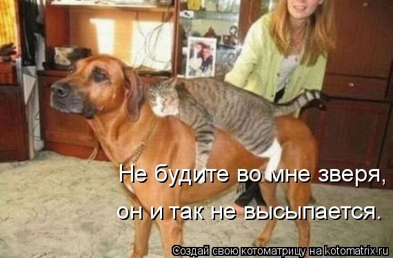 Котоматрица: Не будите во мне зверя, он и так не высыпается.