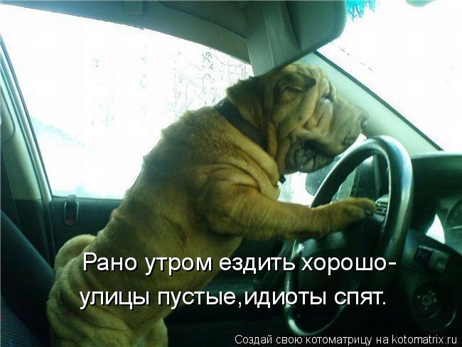 Котоматрица: Рано утром ездить хорошо- улицы пустые,идиоты спят.