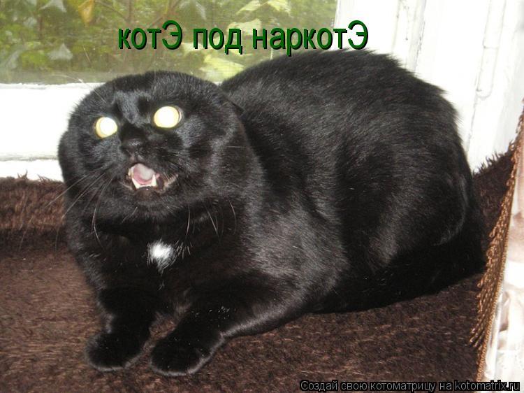 Котоматрица: котЭ под наркотЭ
