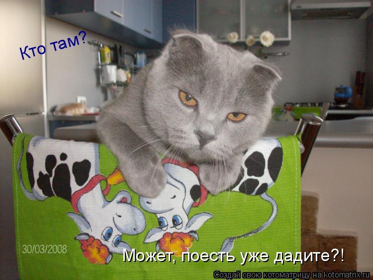 Котоматрица: Кто там? Может, поесть уже дадите?!