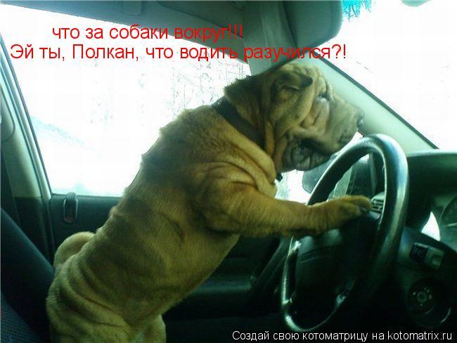Котоматрица: что за собаки вокруг!!! Эй ты, Полкан, что водить разучился?!
