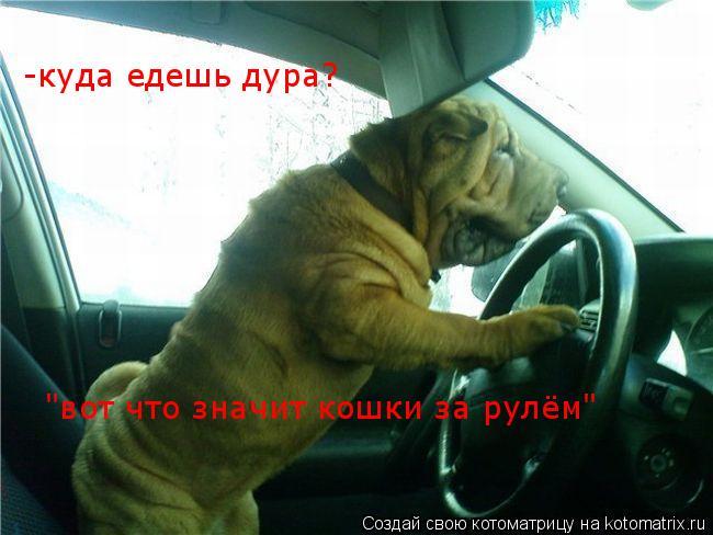 """Котоматрица: -куда едешь дура? """"вот что значит кошки за рулём"""""""