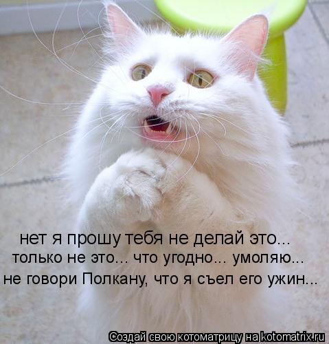 Котоматрица: нет я прошу тебя не делай это... только не это... что угодно... умоляю... не говори Полкану, что я съел его ужин...