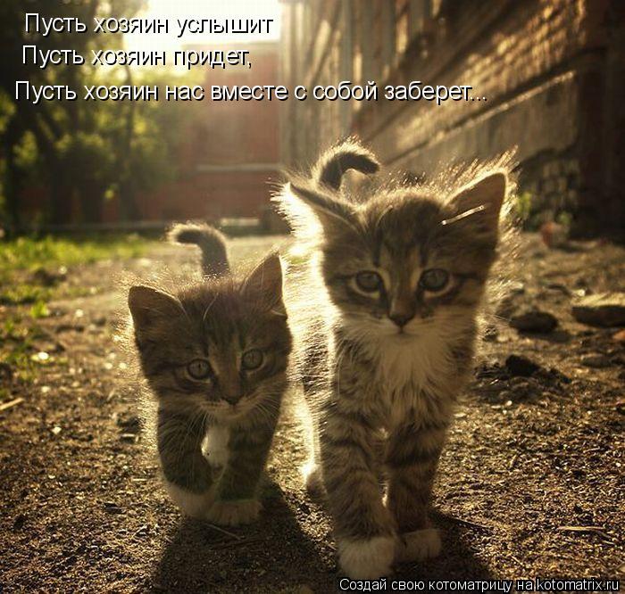 Котоматрица: Пусть хозяин услышит  Пусть хозяин придет,  Пусть хозяин нас вместе с собой заберет...