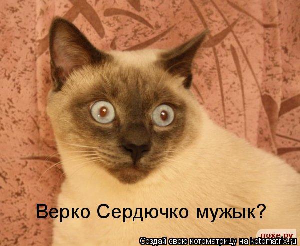 Котоматрица: Верко Сердючко мужык?