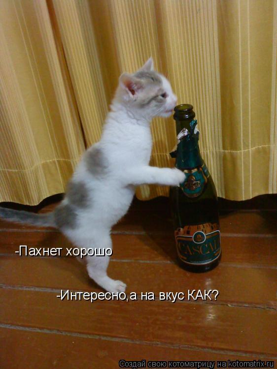 Котоматрица: -Пахнет хорошо -Интересно,а на вкус КАК?