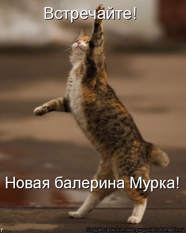 Котоматрица: Встречайте! Новая балерина Мурка!