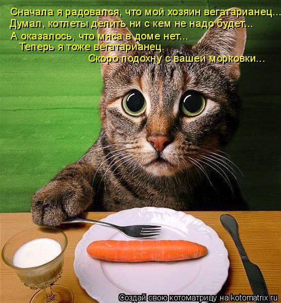 Котоматрица: Сначала я радовался, что мой хозяин вегатарианец... Думал, котлеты делить ни с кем не надо будет... А оказалось, что мяса в доме нет... Теперь я т