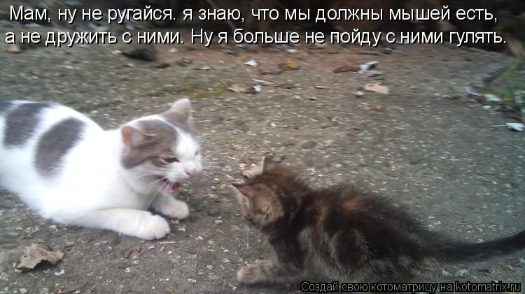 Котоматрица: Мам, ну не ругайся. я знаю, что мы должны мышей есть,  а не дружить с ними. Ну я больше не пойду с ними гулять.