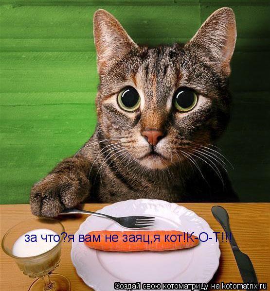 Котоматрица: за что?я вам не заяц,я кот!К-О-Т!!!