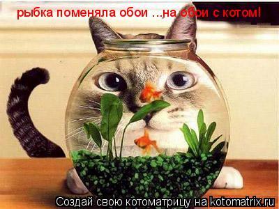 Котоматрица: рыбка поменяла обои ...на обои с котом!