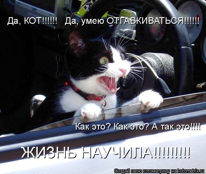 Котоматрица: Да, КОТ!!!!!!   Да, умею ОТГАВКИВАТЬСЯ!!!!!! Как это? Как это? А так это!!!! ЖИЗНЬ НАУЧИЛА!!!!!!!!!
