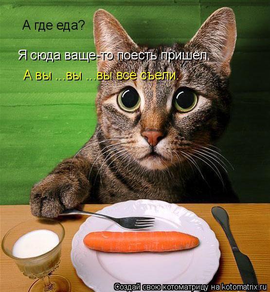 Котоматрица: А где еда? Я сюда ваще-то поесть пришёл. А вы ...вы ...вы всё съели.
