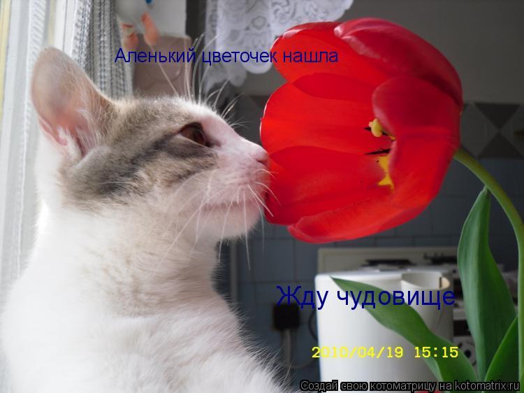 Котоматрица: Аленький цветочек нашла Жду чудовище