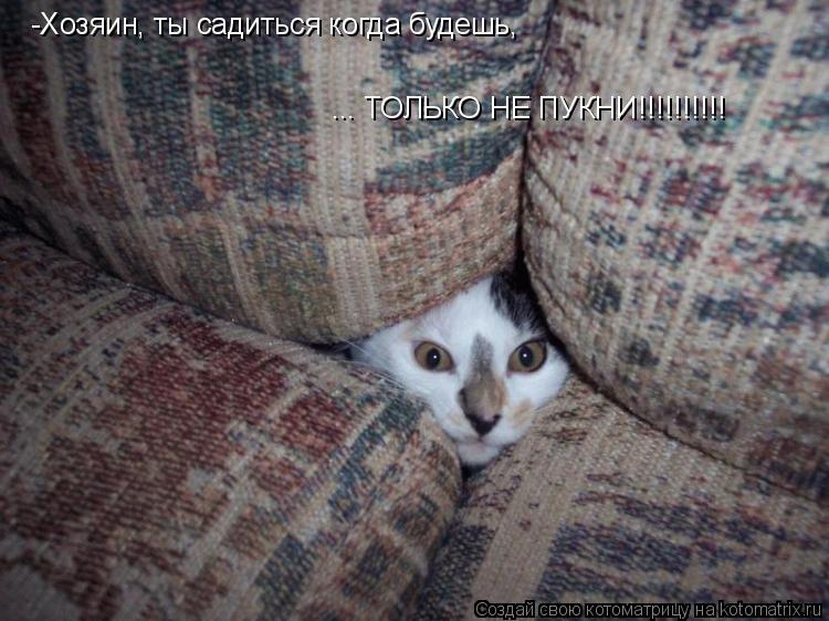 Котоматрица: -Хозяин, ты садиться когда будешь, ... ТОЛЬКО НЕ ПУКНИ!!!!!!!!!!