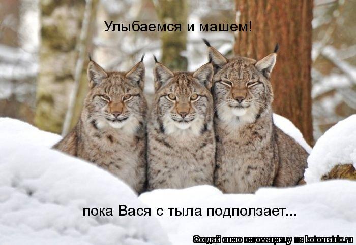 Котоматрица: Улыбаемся и машем!  пока Вася с тыла подползает...