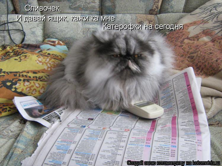 Котоматрица: Сливочек,  И давай ящик, кажи ка мне Катерофки на сегодня