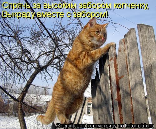 Котоматрица: Спрячь за высоким забором копченку, Выкраду вместе с забором!
