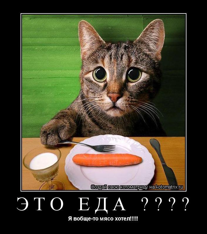 Котоматрица: Это еда ???? Я вобще-то мясо хотел!!!!!