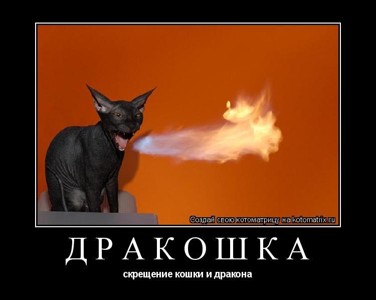 Котоматрица: Дракошка скрещение кошки и дракона