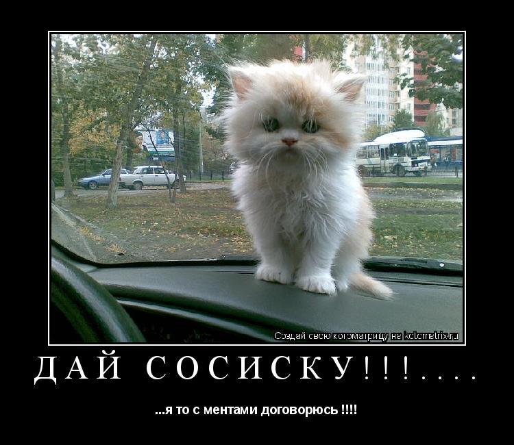 Котоматрица: Дай сосиску!!!.... ...я то с ментами договорюсь !!!!