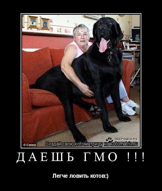 Котоматрица:  Даешь ГМО !!! Легче ловить котов:)