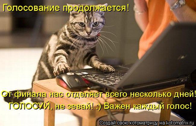 Котоматрица: Голосование продолжается! От финала нас отделяет всего несколько дней! ГОЛОСУЙ, не зевай! :) Важен каждый голос!