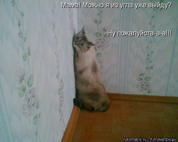 Котоматрица: Мама! Можно я из угла уже выйду?  Ну пожалуйста-а-а!!! Ну пожалуйста-а-а!!! Ну пожалуйста-а-а!!!