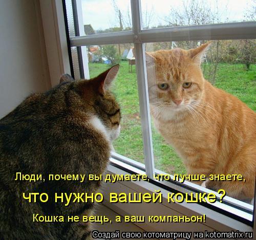 Котоматрица: Люди, почему вы думаете, что лучше знаете, что нужно вашей кошке? Кошка не вещь, а ваш компаньон!