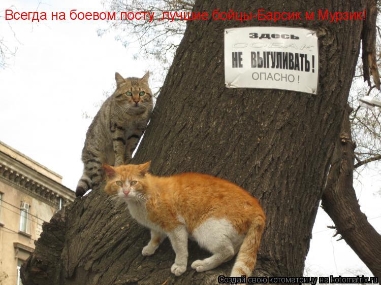 Котоматрица: Всегда на боевом посту ,лучшие бойцы-Барсик м Мурзик!
