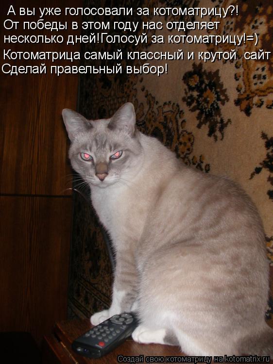 Котоматрица: А вы уже голосовали за котоматрицу?! От победы в этом году нас отделяет несколько дней!Голосуй за котоматрицу!=) Котоматрица самый классный