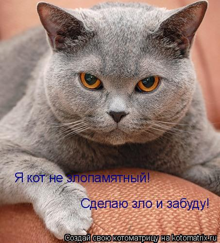 Котоматрица: Я кот не злопамятный! Сделаю зло и забуду!