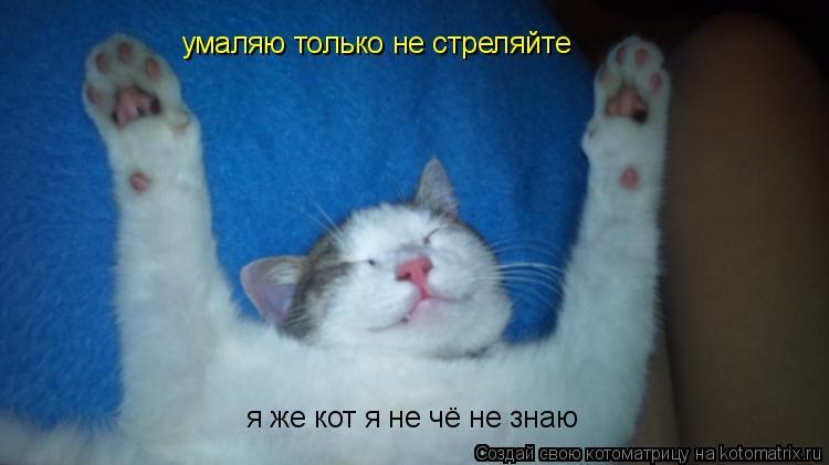 Котоматрица: умаляю только не стреляйте я же кот я не чё не знаю