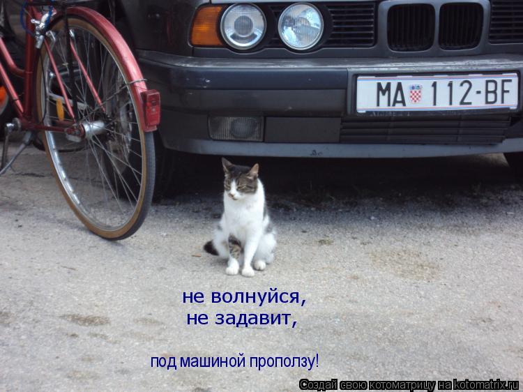 Котоматрица: не волнуйся, не задавит, под машиной проползу!