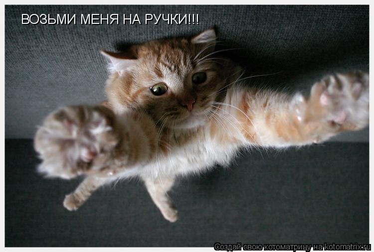 Котоматрица: ВОЗЬМИ МЕНЯ НА РУЧКИ!!!