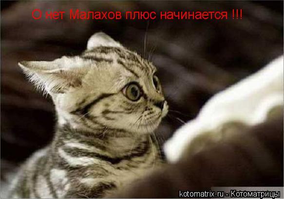Котоматрица: О нет Малахов плюс начинается !!!