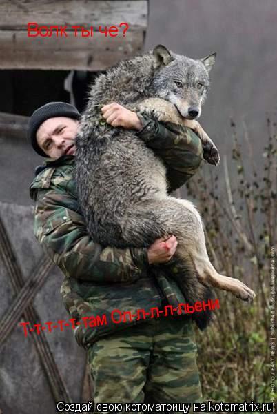 Котоматрица: Волк ты че? Т-т-т-т-т-там Ол-л-л-л-льени Т-т-т-т-т-там Ол-л-л-л-льени