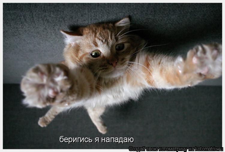 Котоматрица: беригись я нападаю