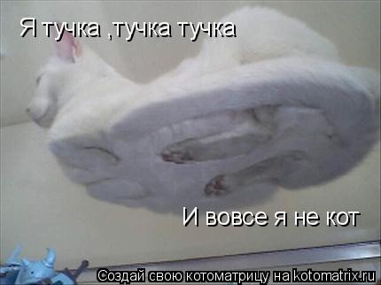 Котоматрица: Я тучка ,тучка тучка И вовсе я не кот