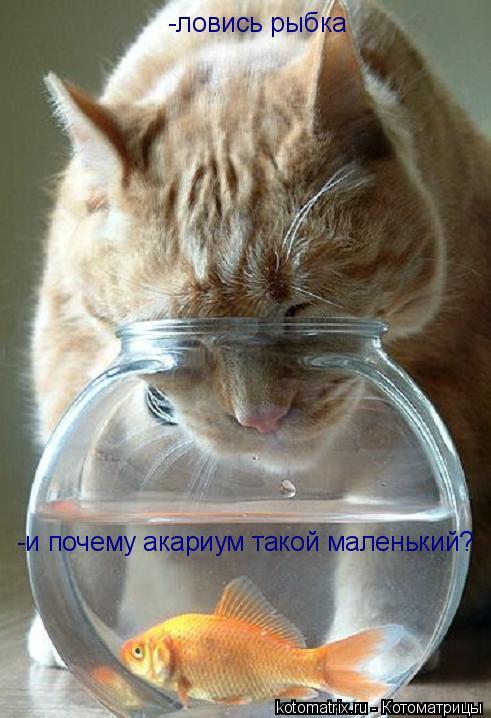 Котоматрица: -ловись рыбка -и почему акариум такой маленький? -и почему акариум такой маленький?